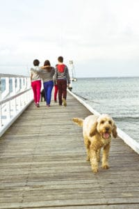 Pet Friendly Accommodation Mornington Peninsula
