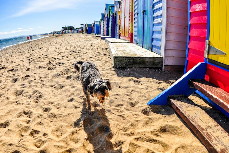 dog friendly attractions mornington peninsula