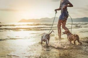 dog friendly attractions mornington peninsula