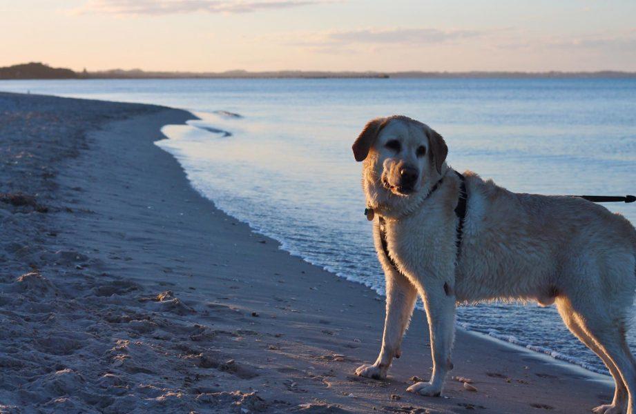 Sixteenth Beach Rye Back Beach