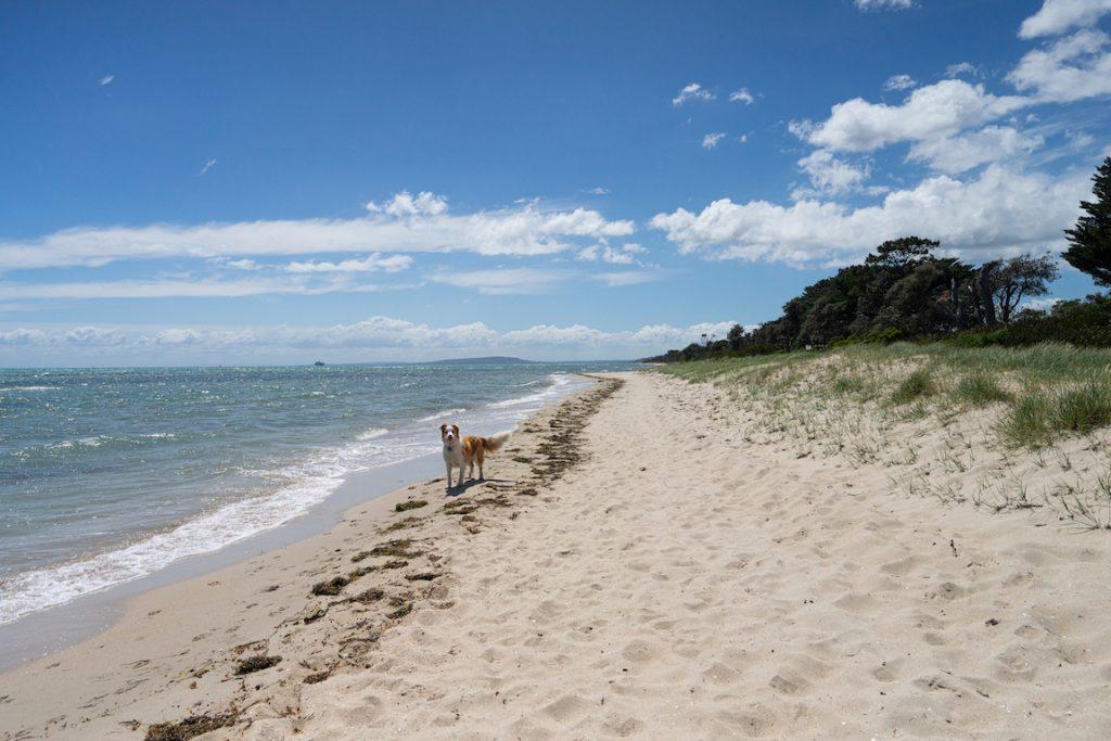 Dog friendly beaches on the Mornington Peninsula