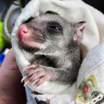 Help the bushfire animals and make pouches for injured animals