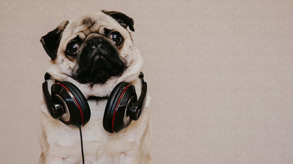 dog wearing headphones to represent podcast of the week.  Give yourself permission to choose the life you want
