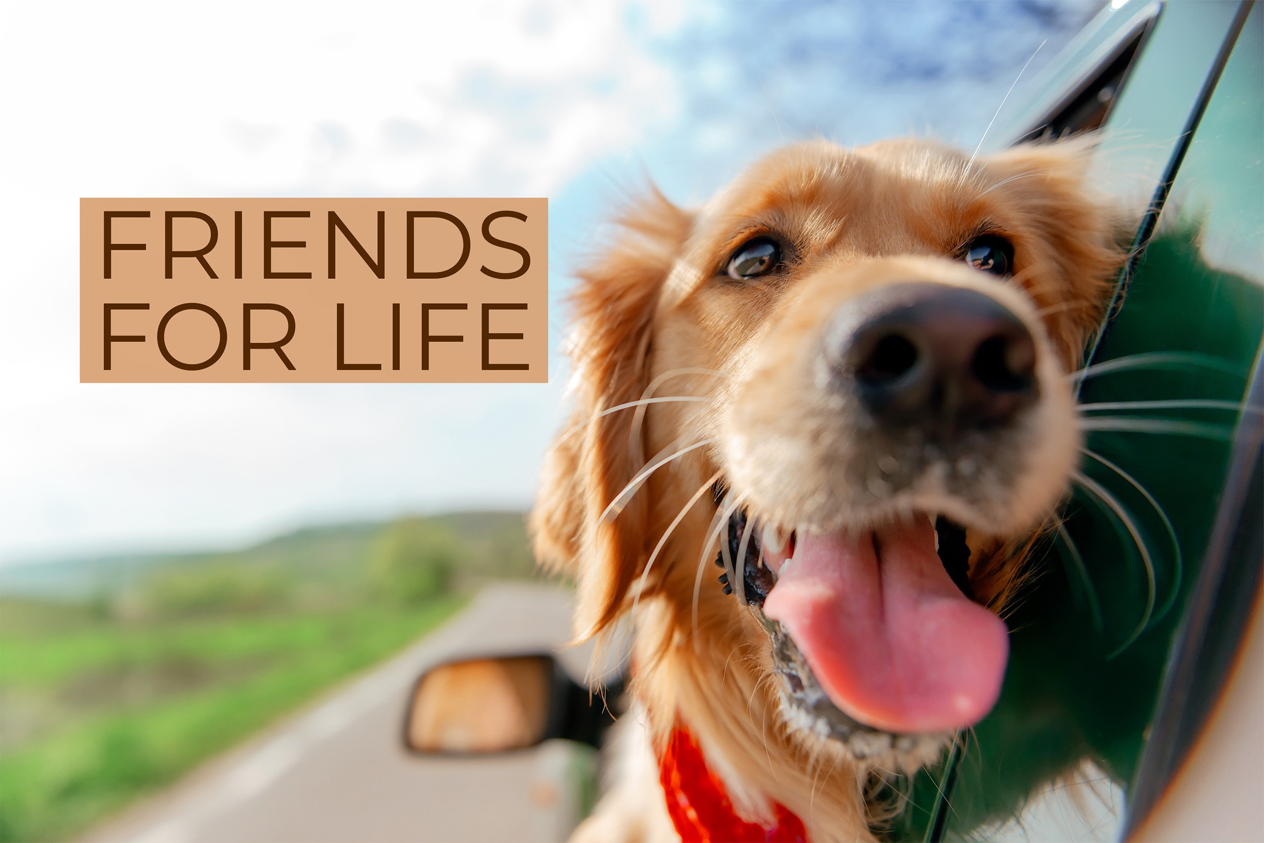 friendsforlife