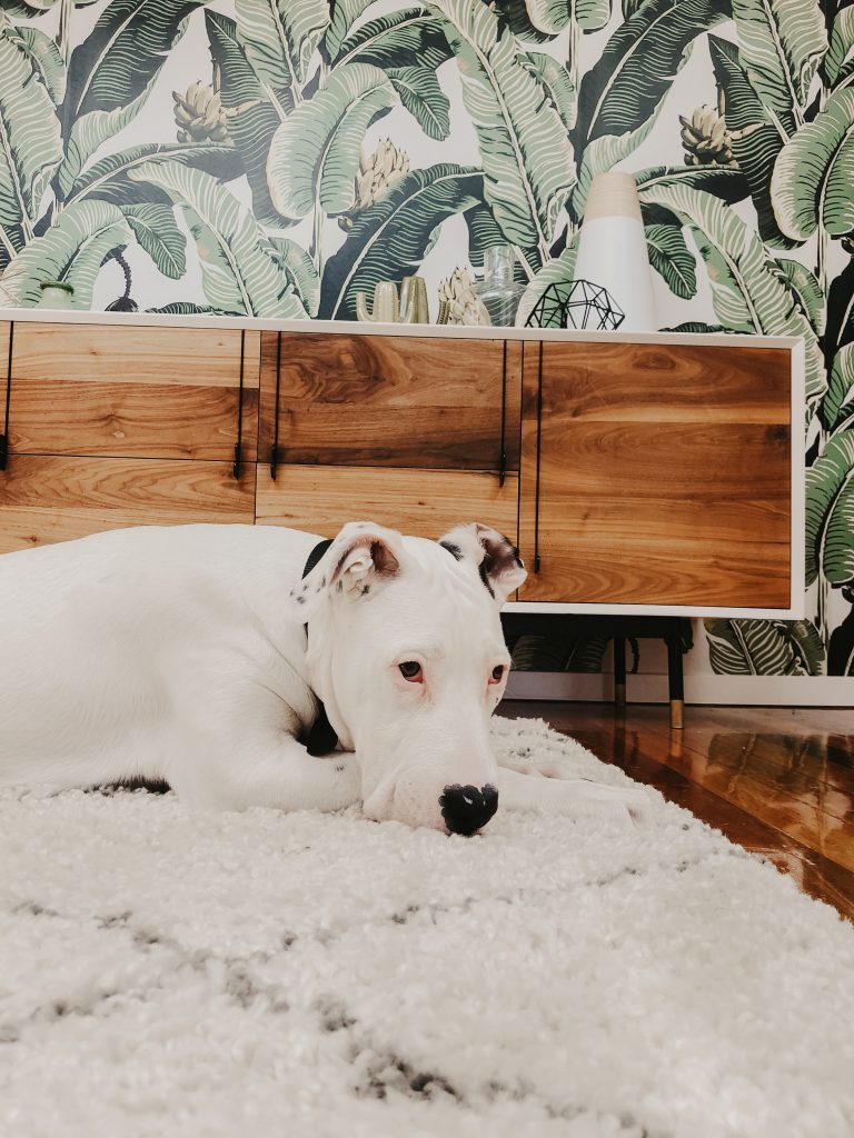 pet-friendly holiday accommodation